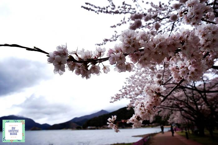 เที่ยวคาวากุจิโกะ 4