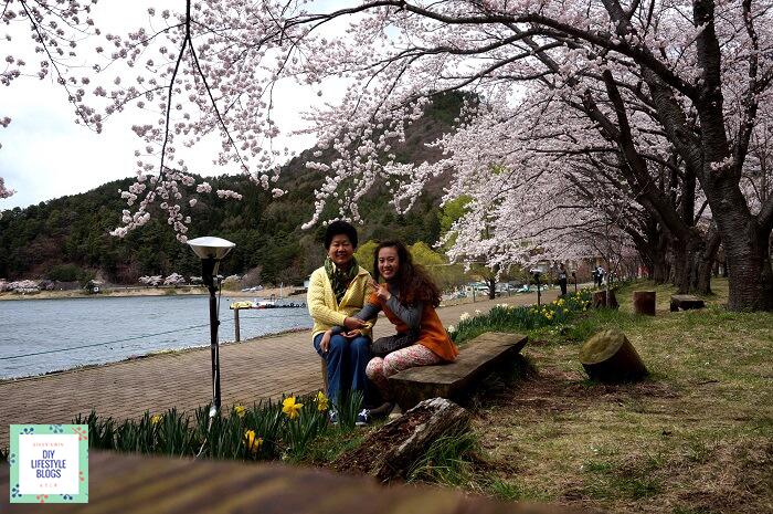 ซากุระ ญี่ปุ่น คาวากุจิโกะ 12