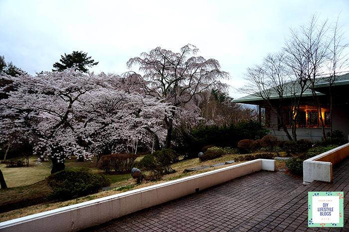 ซากุระ ญี่ปุ่น Fuji View Hotel