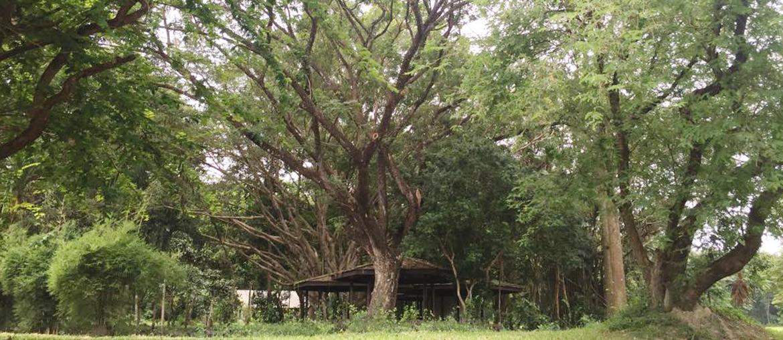 """เที่ยวเชิงเกษตร (Eco Tourism) ตามรอยโครงการพระราชดำริที่ """"เขาหินซ้อน"""" ♡"""